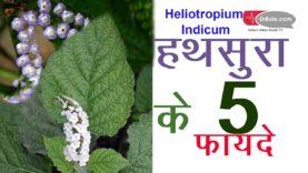हथसुरा के सेहतभरे 3 फायदे (hindi health tips)