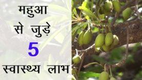 महुआ से जुड़े 5 स्वास्थ्य लाभ (Hindi Health Tips)