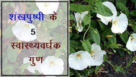 शंखपुष्पी के 5 स्वास्थ्यवर्धक गुण  (Hindi Health Tips)