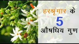 हरश्रृंगार के 5 औषधिय गुण (hindi health tips)