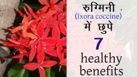 रुग्मिनी में छुपे 7 healthy फायदे (Hindi Health Tips)