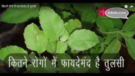 कितने रोगों में फायदेमंद है तुलसी– Hindi Health Tips