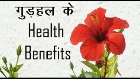 गुड़हल के Health Benefits (hindi health tips)