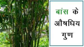 बांस के औषधिय गुण (Hindi Health Tips)