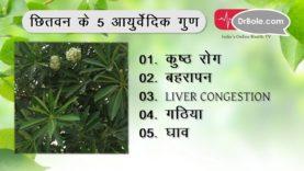 कुष्ठ रोग (Leprosy) समेत 5 बीमारियों के लिए फायदेमंद छितवन- Hindi Health Tips
